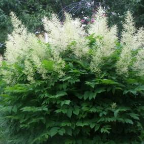 многолетние тенелюбивые растения для сада идеи виды