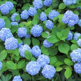 многолетние тенелюбивые растения для сада обзор
