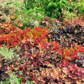 многолетние тенелюбивые растения для сада фото идеи