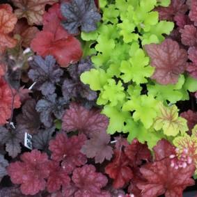 многолетние тенелюбивые растения для сада обзор фото