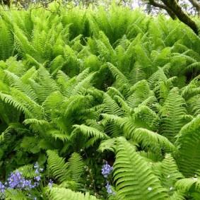 многолетние тенелюбивые растения для сада фото обзор