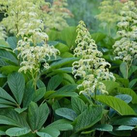 многолетние тенелюбивые растения для сада виды оформления