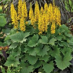 многолетние тенелюбивые растения для сада варианты декора