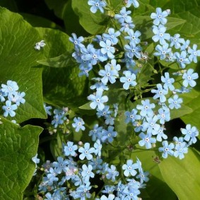 многолетние тенелюбивые растения для сада варианты оформления