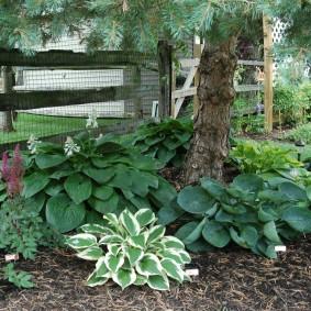 многолетние тенелюбивые растения для сада правила ухода