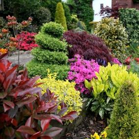 многолетние тенелюбивые растения для сада комбинирование