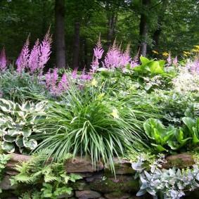 многолетние тенелюбивые растения для сада дизайн