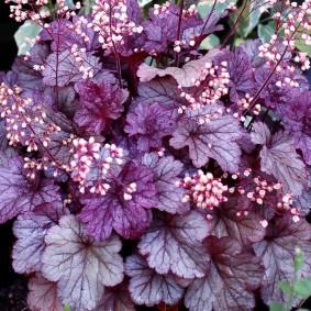 многолетние тенелюбивые растения для сада дизайн фото