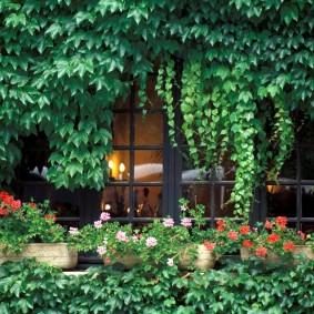 многолетние тенелюбивые растения для сада дизайн идеи