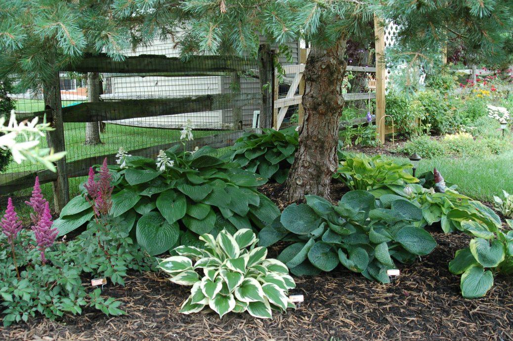 многолетние тенелюбивые растения для сада идеи