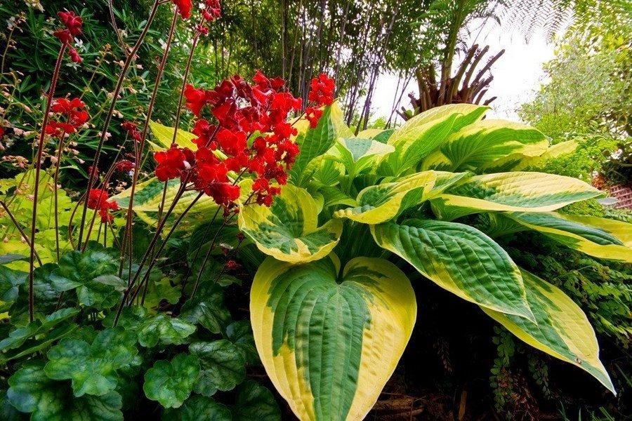 многолетние теневыносливые цветы