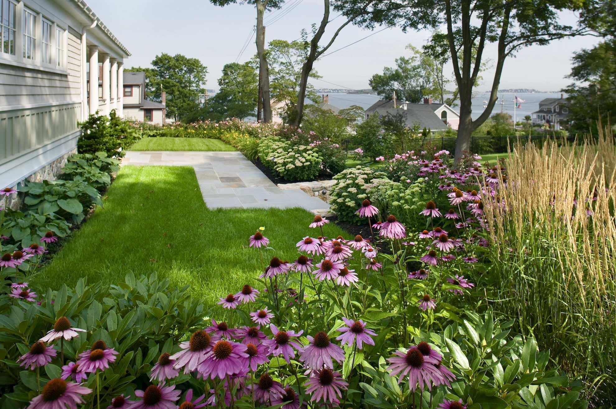 многолетние растения в саду