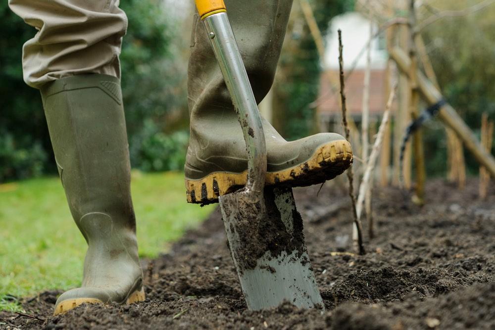 Перекопка огорода штыковой лопатой осенью