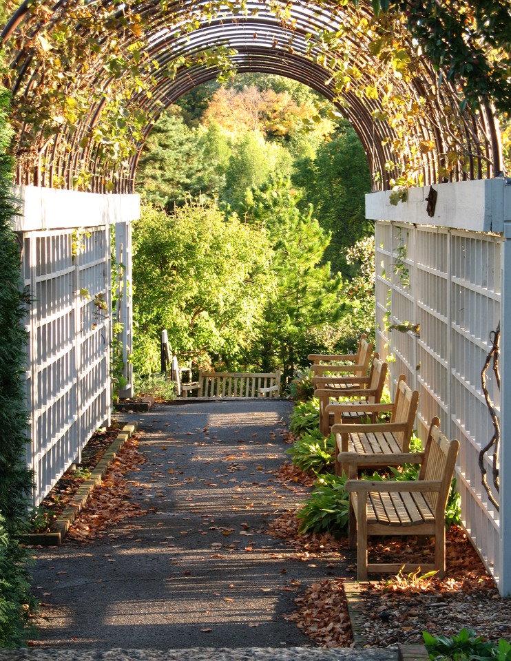 Скамейки для отдыха в тени перголы с виноградом
