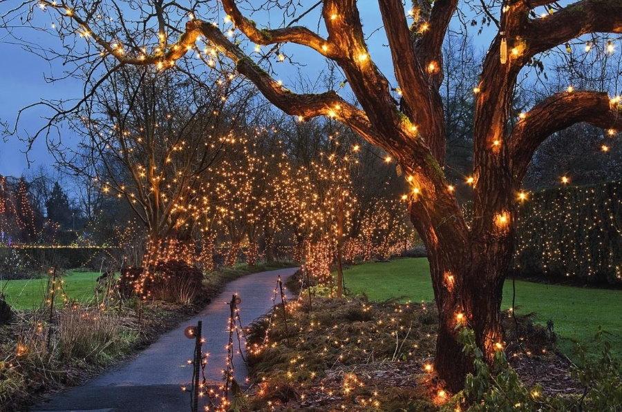 Декоративная подсветка стволов садовых деревьев