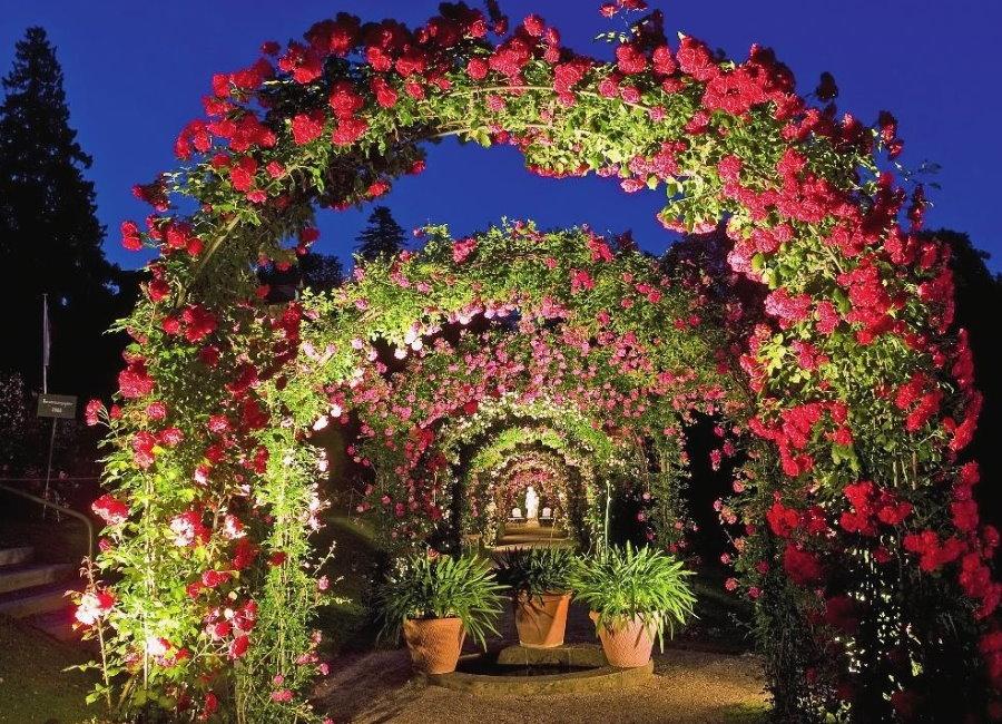 Подсветка арки с плетистыми розами