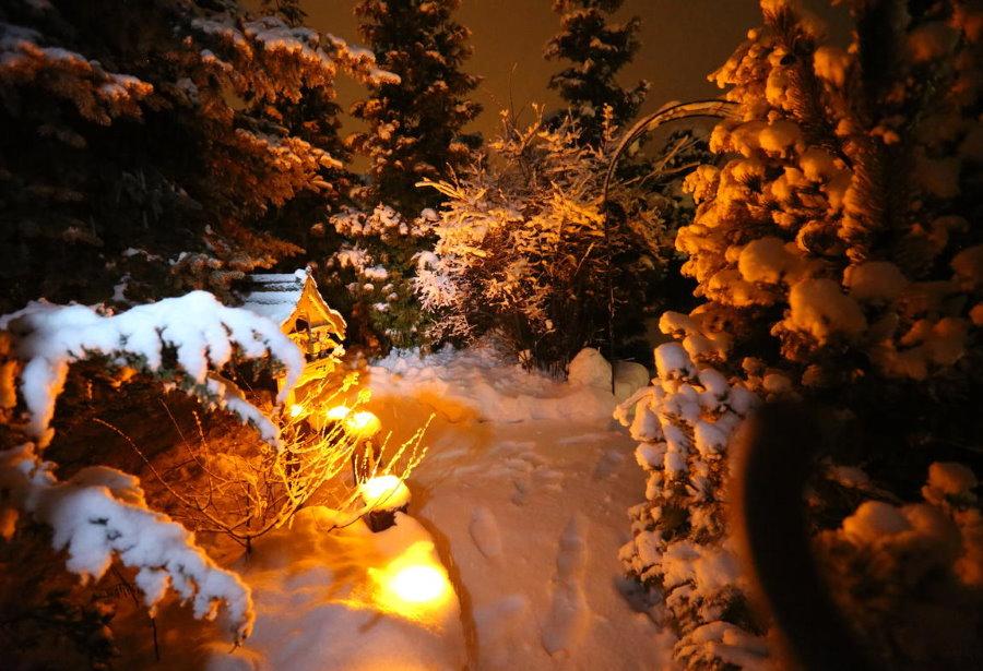 Зимняя подсветка сада с хвойными растениями