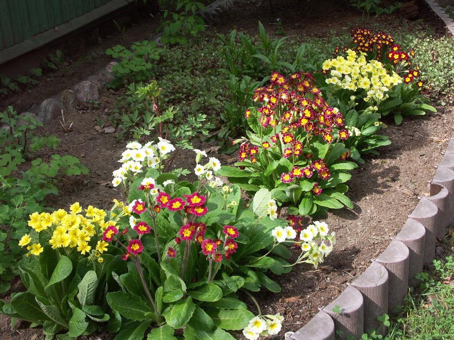 Садовая клумба с весенними первоцветами