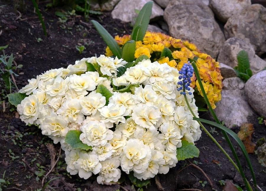 Белые цветки с сердцевиной кремового окраса