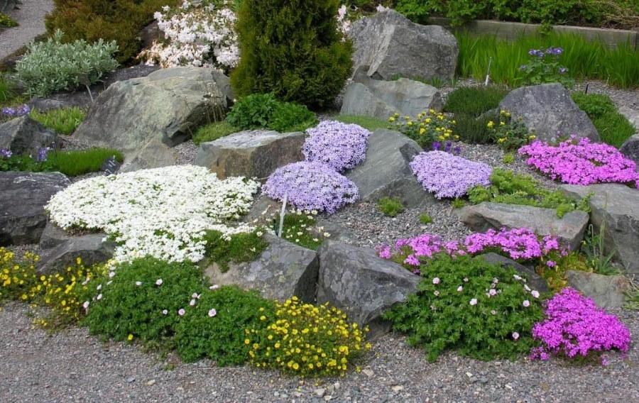 Каменистый рокарий из нетребовательных растений
