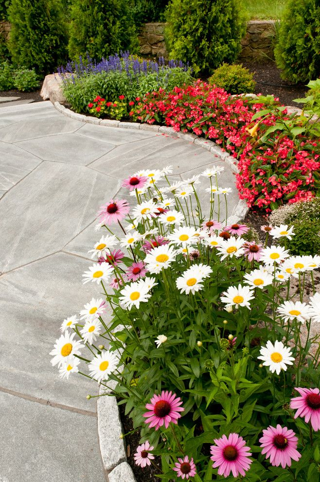 Крупные цветки ромашек на извилистой клумбе