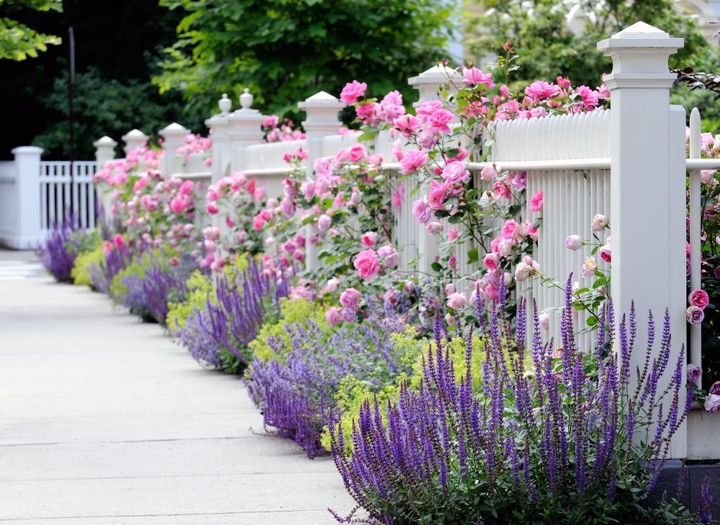 цветы в саду вдоль забора