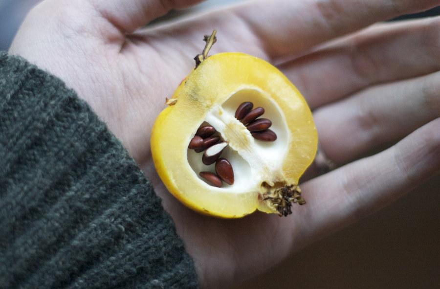 Разрезанный плод японской айвы с семенами внутри