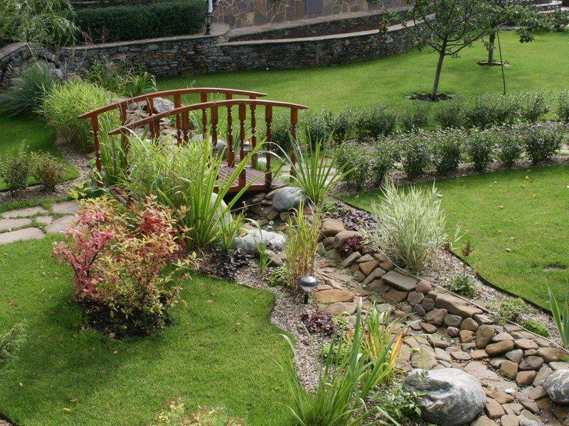 сухой ручей с растениями