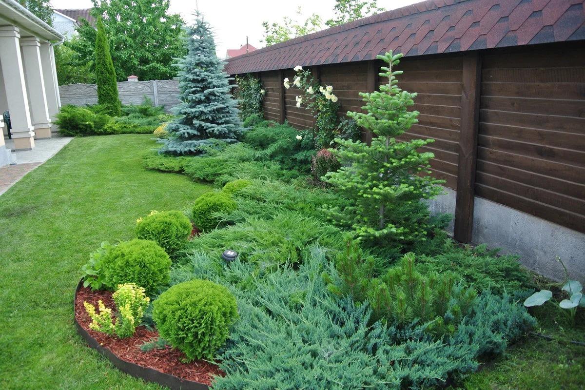 хвойные растения в саду декор