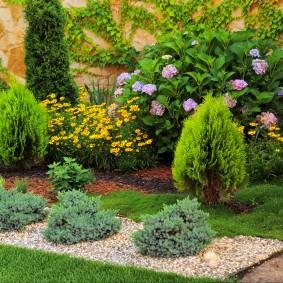хвойные растения в саду фото идеи