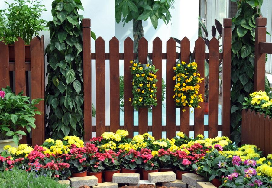 Яркие цветы на фоне темно-коричневого забора