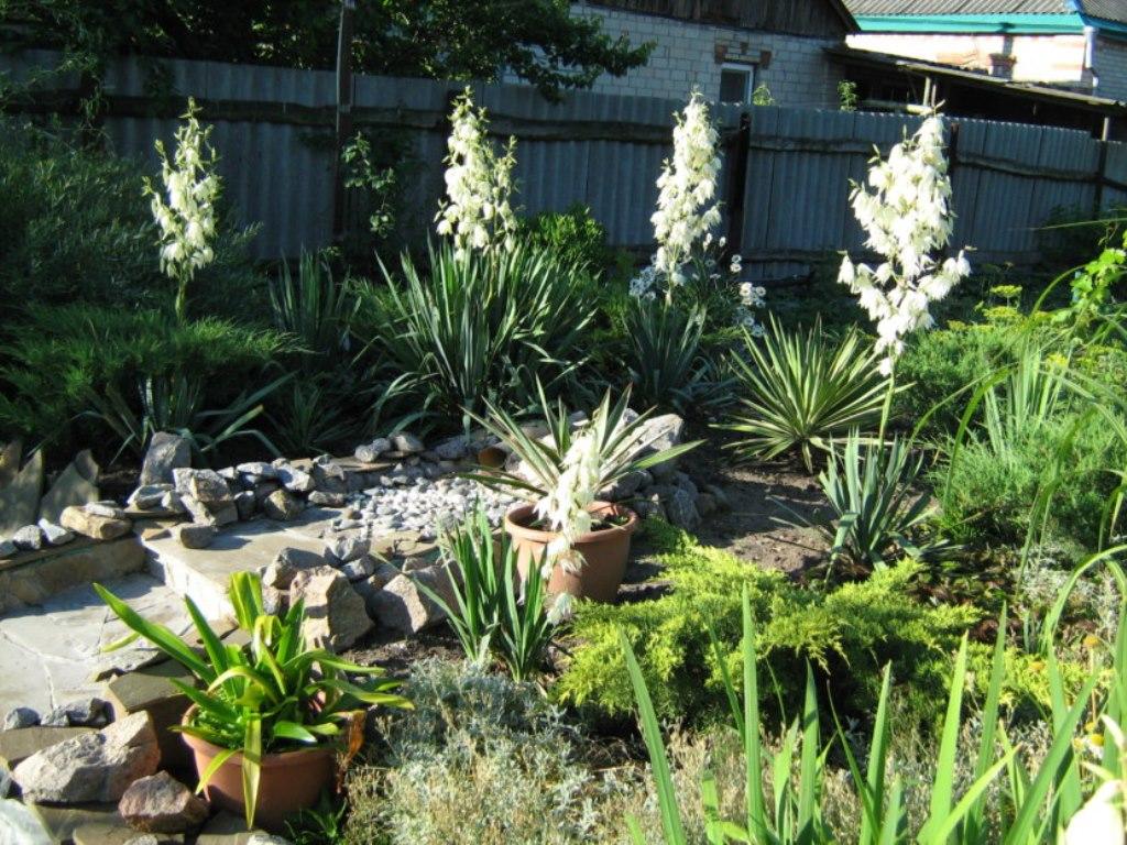 юкка садовая декор