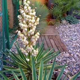 юкка садовая на участке фото декора
