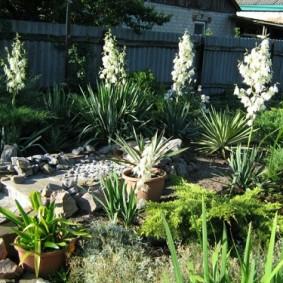 юкка садовая на участке виды дизайна