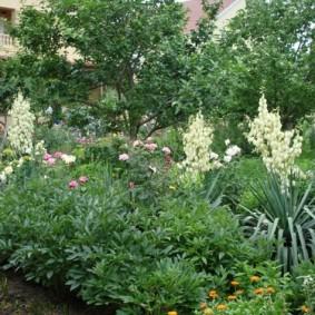 юкка садовая на участке фото обзор
