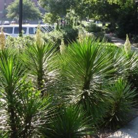 юкка садовая на участке фото дизайн
