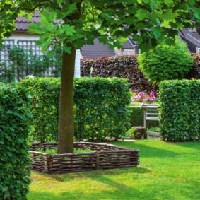 зонирование дачного участка с растениями