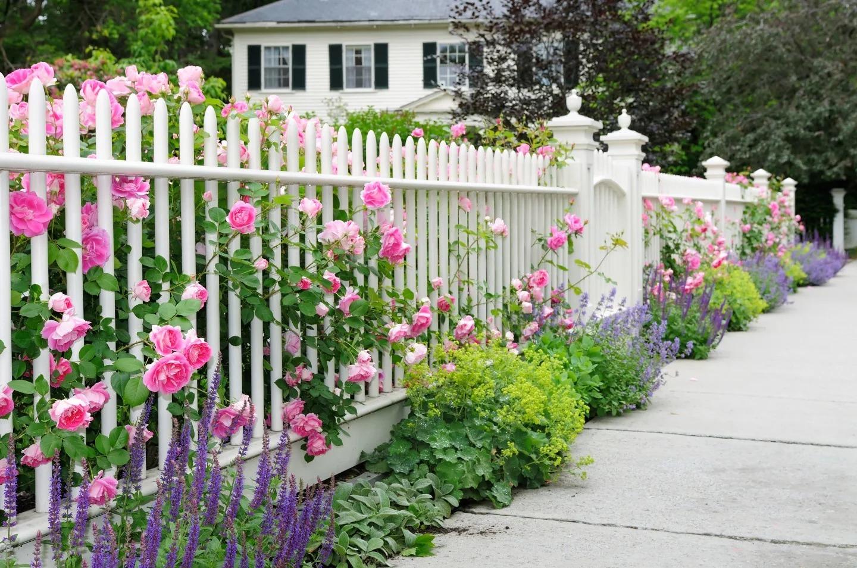 цветы вдоль забора