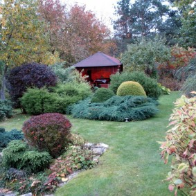 дёрен в саду фото варианты