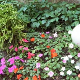 Кустики бальзамина около садового фонарика