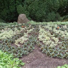 Садовая клумба с низкорослым бальзамином