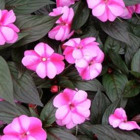 Красивые цветки розового окраса