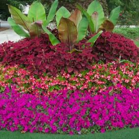 Круглая клумба с бальзамином и другими цветами