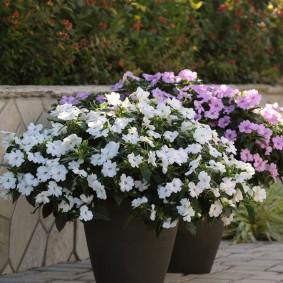 Красивые цветы в керамических вазонах