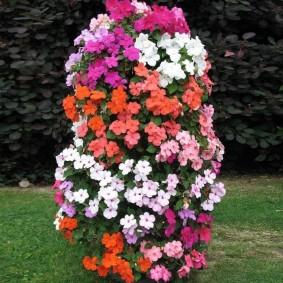 Вертикальная клумба из цветущих бальзаминов