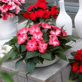 Садовый цветок с нежными лепестками