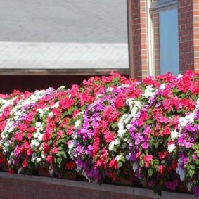 Высокая клумба с яркими цветами