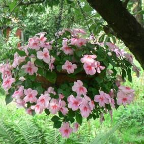 Подвесной горшок с цветами на ветке дерева