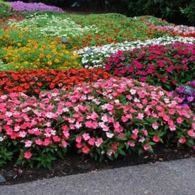 Цветочная поляна на садовом участке