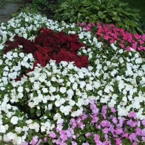Дачная клумба с теневыносливыми цветами